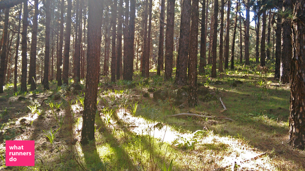 Abundance of Trails in the Pine Forests of Las Lagunetas